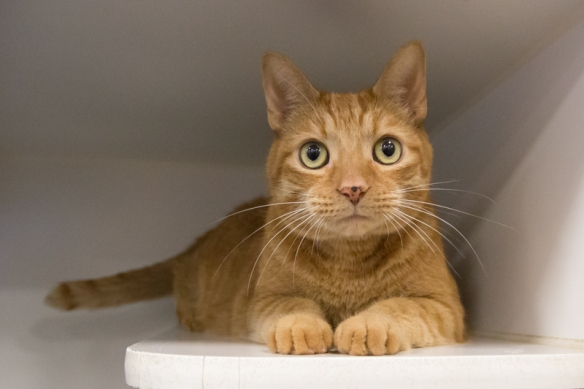 Adopt A Friend This Weekend Toronto Cat Rescue