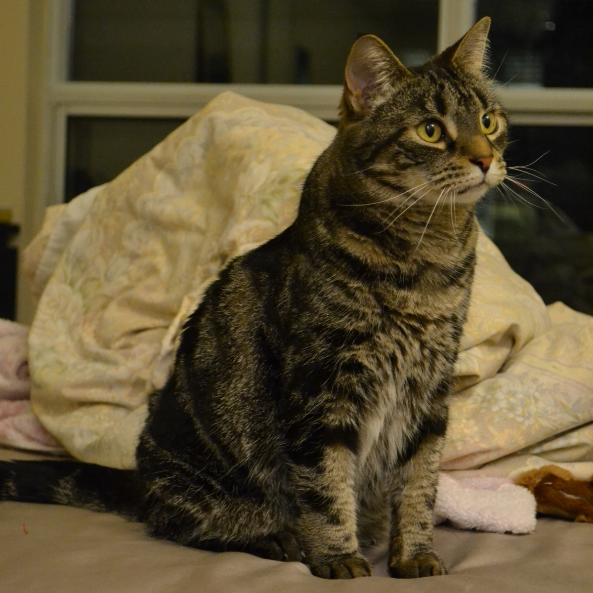Toronto Cat Rescue Available Cats