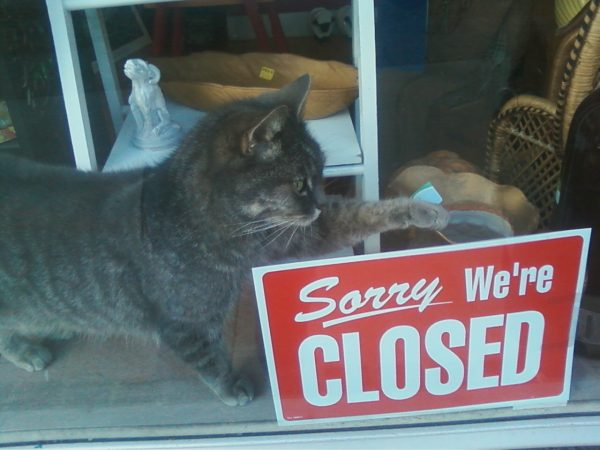 cute_cat_closedsign-600x450