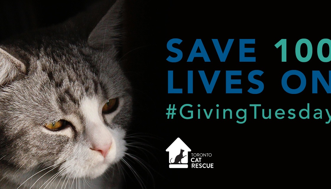 Save 100 cats in Toronto, Ontario
